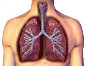 bronxialnye-lyogochnye-zabolevaniya-i-lekarstvennye-rasteniya